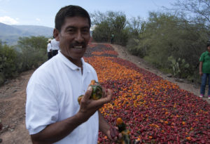 Félix Martínez grows more chilehuacle than anyone else. He has raised an alarm about its future.