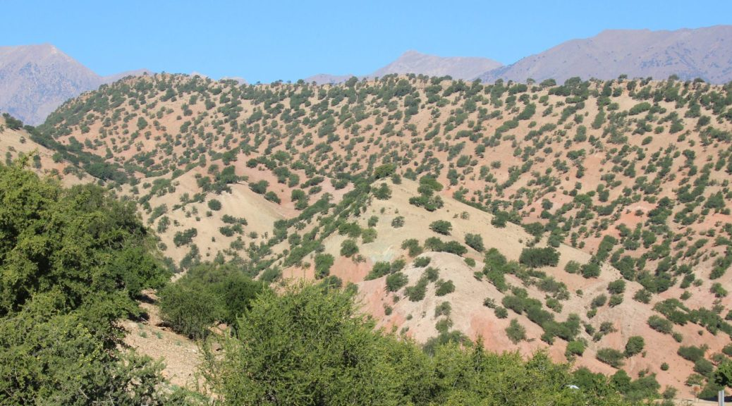 header image of argan forest landscape in Morocco via https://www.flickr.com/photos/ruedabola/